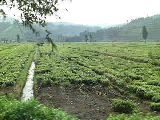 rwanda (56)