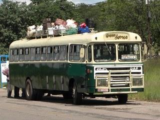fro minibrawayo (1)