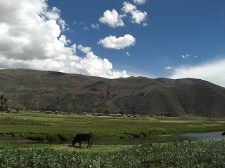 inka (64)