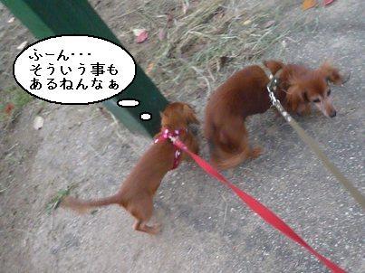 画像 292blog