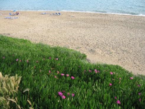 うちのお義母さんの実家に近い、アマリアーダにあるクルータス・ビーチ。やわらかい砂浜がどこまでも続く、贅沢なビーチで夏はすごく混みます。