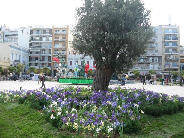 何もなかった広場の真ん中に、オリーブの木と芝生が敷かれて緑たっぷりのイメージに。