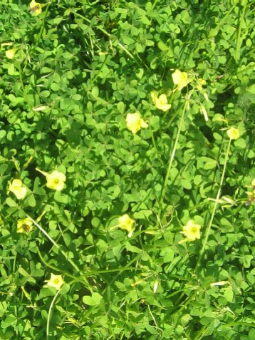 川沿いにたくさん咲いている草花
