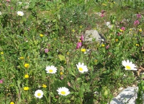 カモミールなどいろいろな草花。