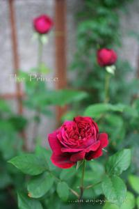 r_prince01.jpg