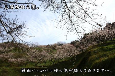 1003-45.jpg