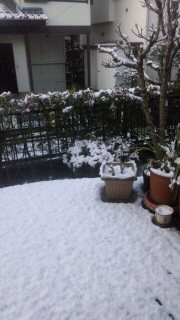 2012.1.23 雪