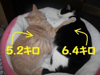 230303デカ猫1
