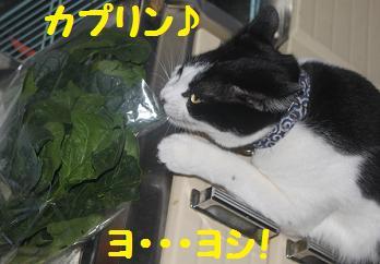 20110309野菜5