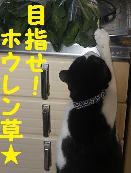 20110309野菜3