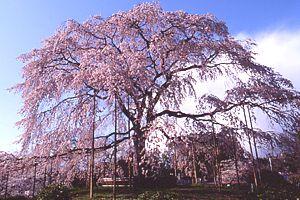 maruyama_20100308132759.jpg
