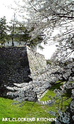 名古屋城の桜3