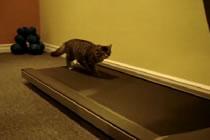 cats-on-a-treadmill.jpg