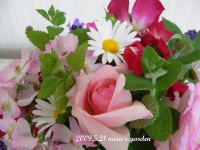 090521rose (2)
