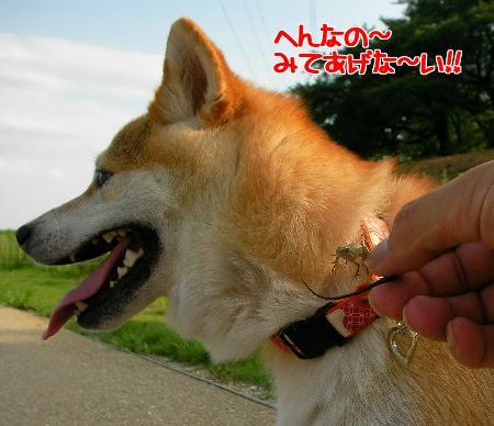 n6_69WME.jpg