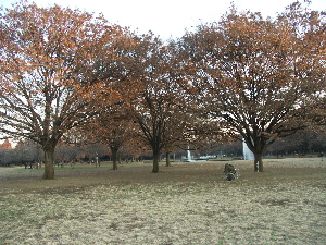 20051208_3.jpg