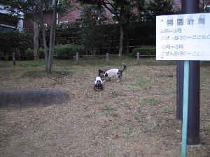 20060815_7.jpg