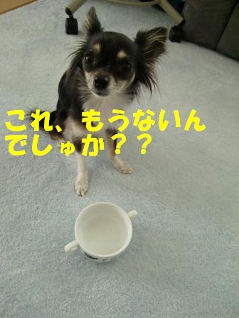 CIMG2072.jpg