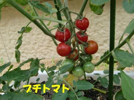 CIMG2184.jpg