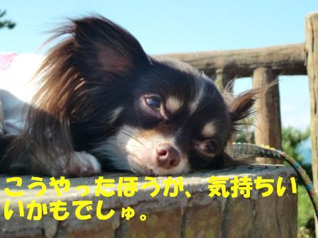 CIMG3994.jpg