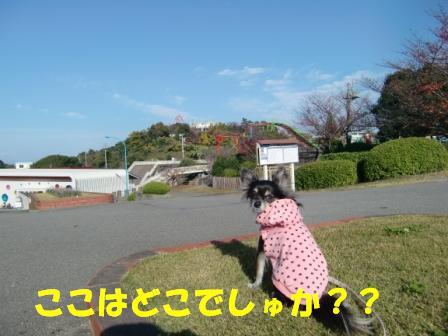 CIMG4324.jpg