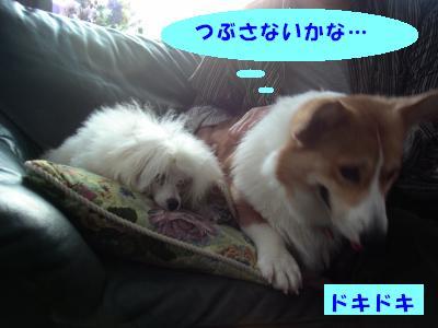 ジンジャーとシナモン4