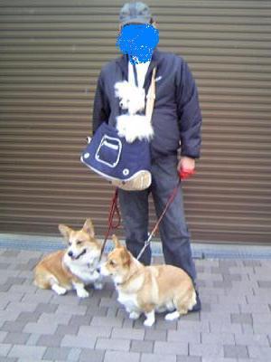 ジンジャーとシナモン9
