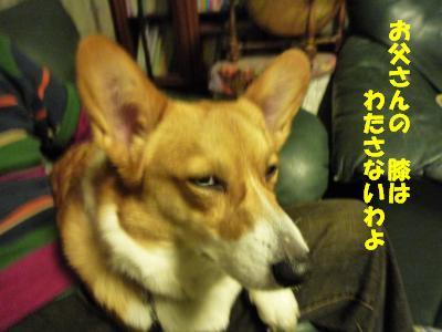 2008.12.3  シナモン3