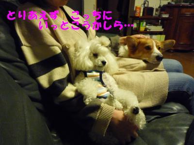 2008.12.3 シナモン 6