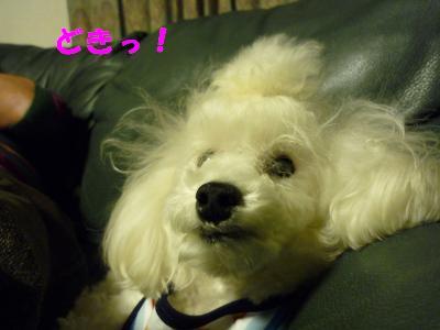 2008.12.3 シナモン4