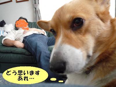 2008.12.3 シナモン8