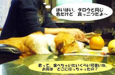 dc102111(修整2)(1)(1)
