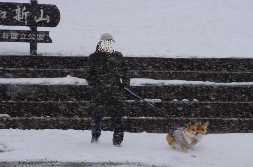 吹雪なのに笑顔