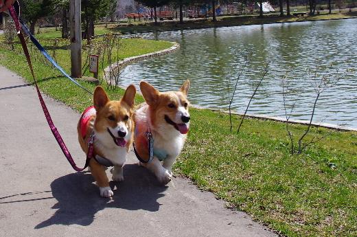 仲良く散歩 本別公園
