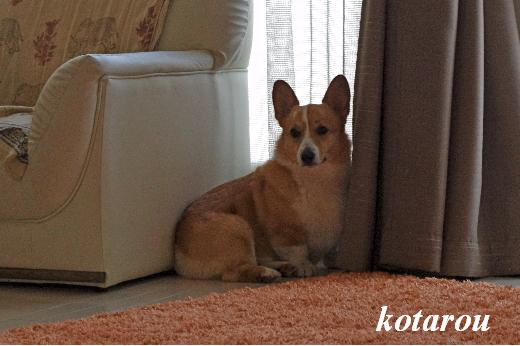 Kotarou2.jpg
