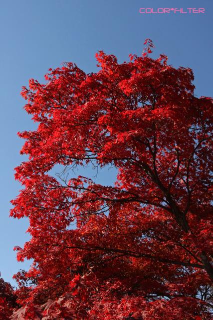 紅葉 -Red Leaf- 02