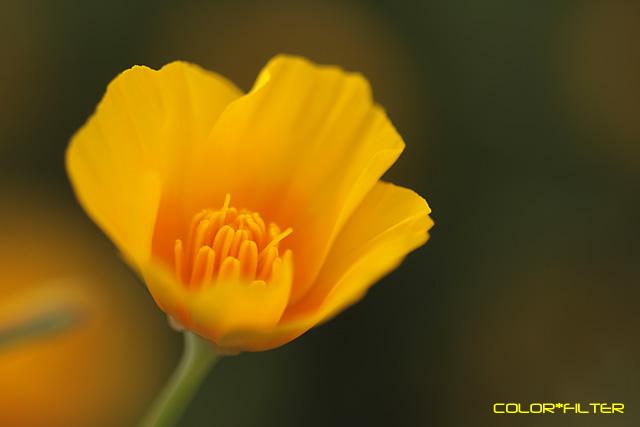 マクロな黄色い花