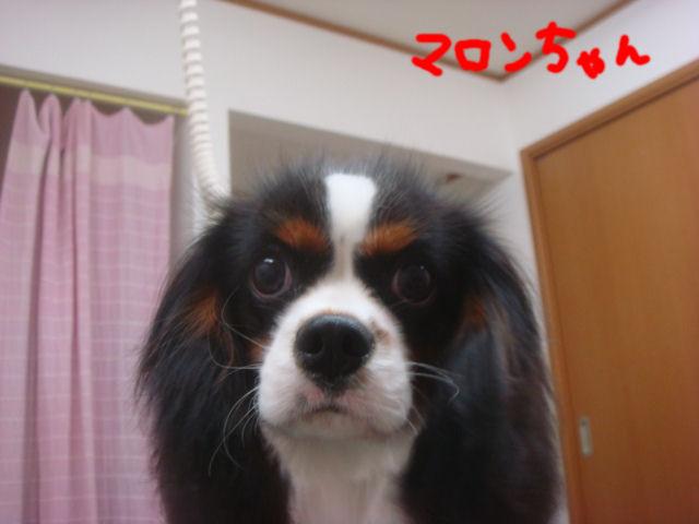 DSC04154blog.jpg