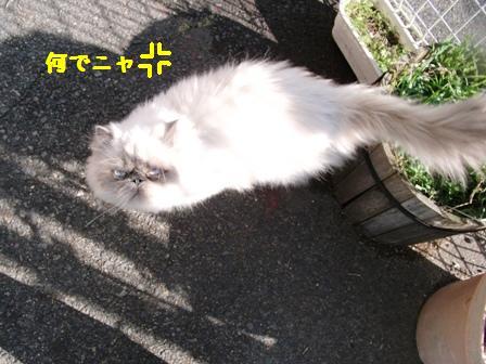 DSCF0444_20111129174313.jpg