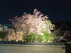 20060416-saku.jpg