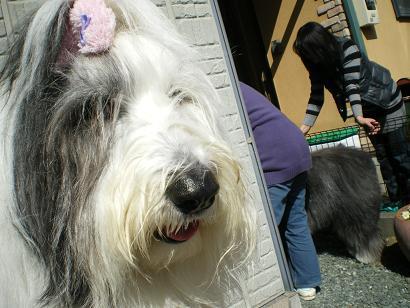 Cookie_20110305201413.jpg