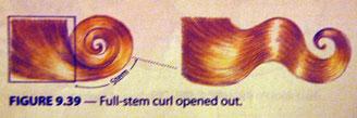 Fullstem-curl.jpg