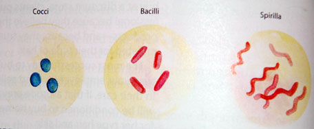Shape-of-Bacteria.jpg