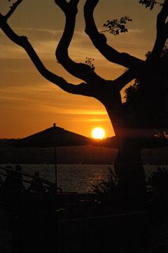 Tree--Sun-Set.jpg