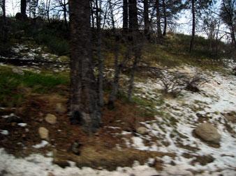 snowboad3.jpg