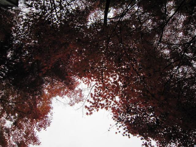 京都旅行09年11月24~27日 004