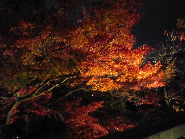 京都旅行09年11月24~27日 050