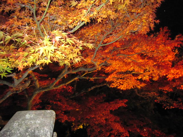 京都旅行09年11月24~27日 052
