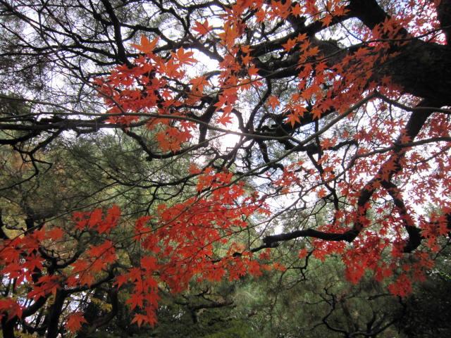 京都旅行09年11月24~27日 140