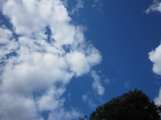 京都旅行09年11月24~27日 159